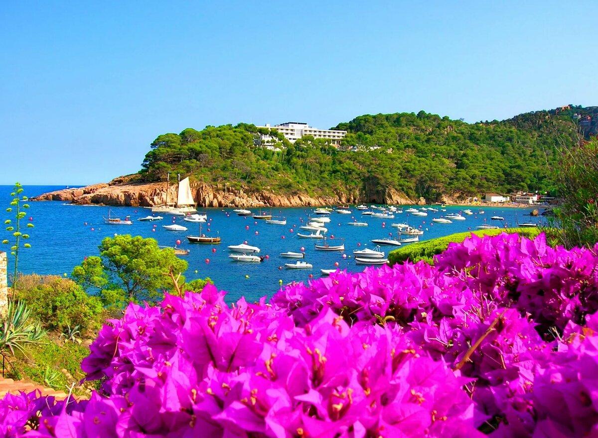 цветы на побережье фото очень много, каждый