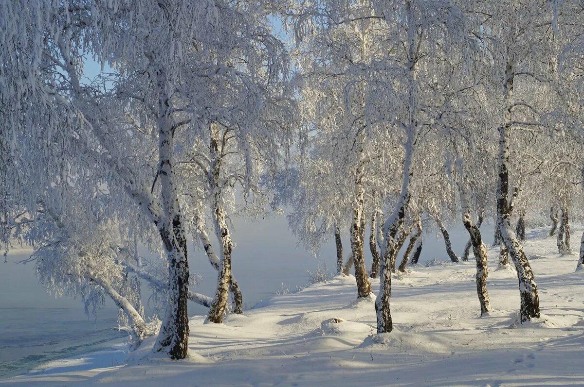 Зима картинки березы