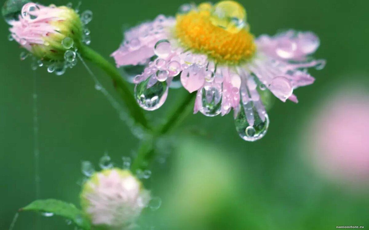 Фото цветы роса и солнце