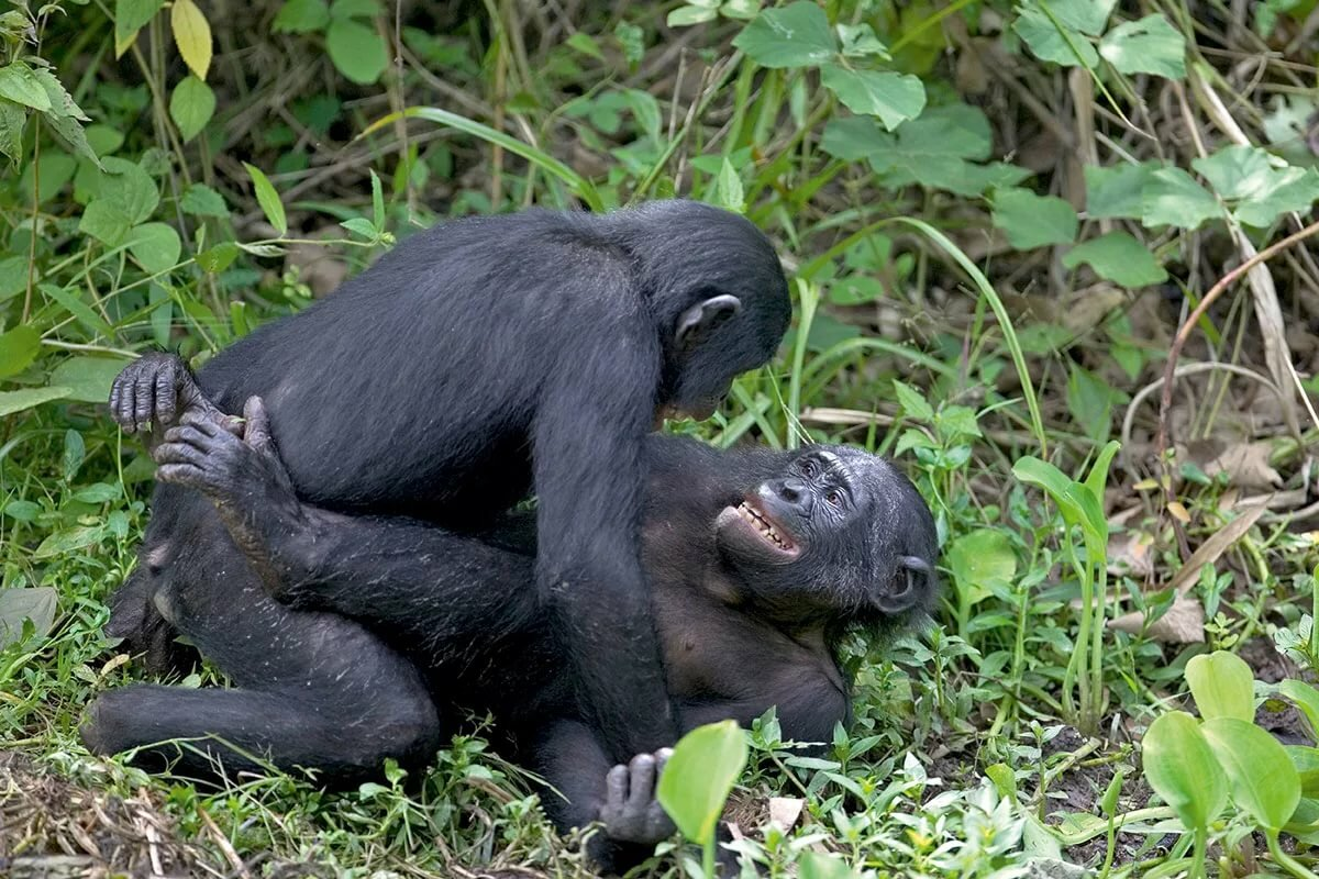 Monkey sex girl porn