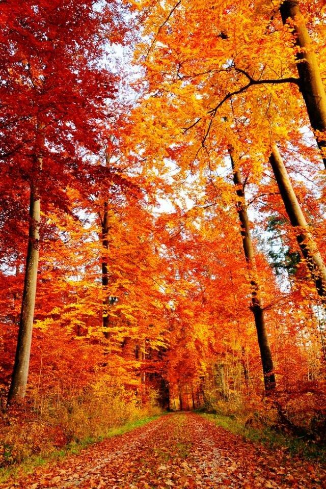 осень вертикальные картинки сентябрь видите