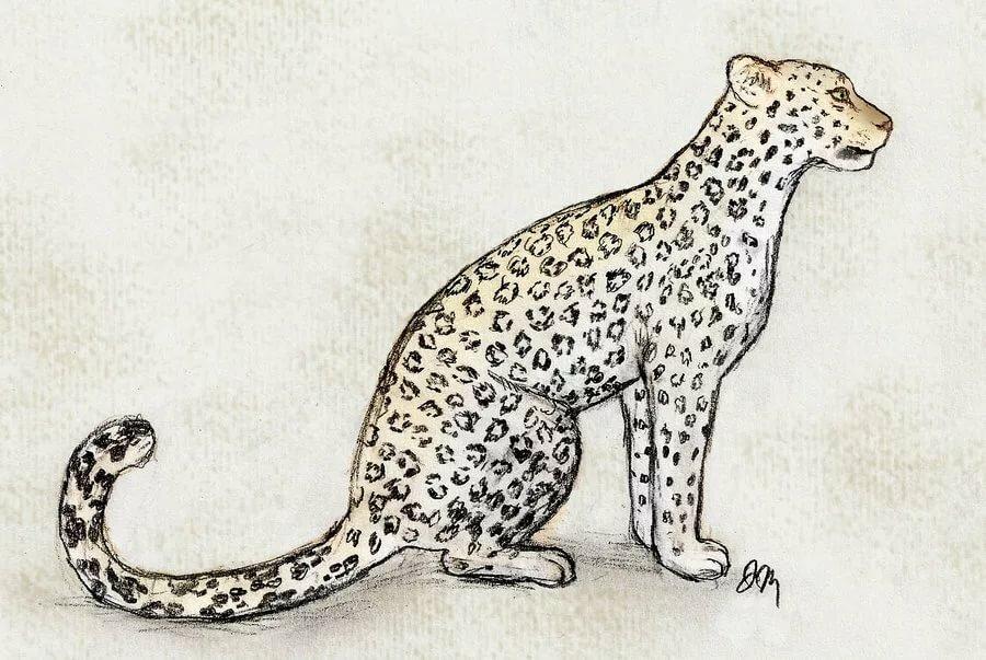 Дальневосточный леопард рисунок карандашом
