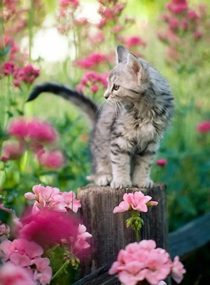 Животные с цветами фото