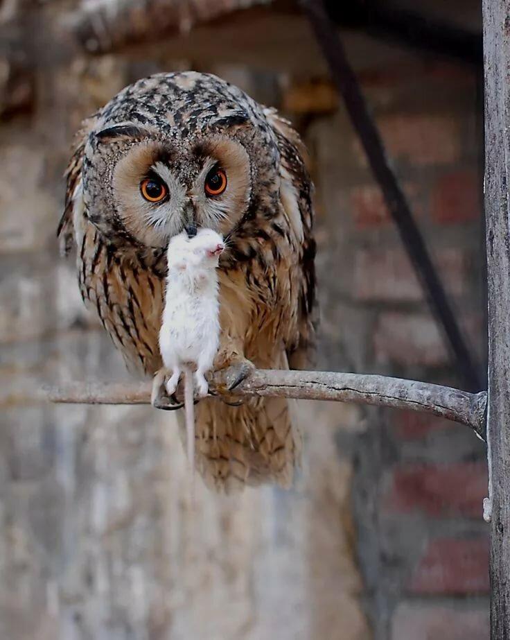 взрослые, картинка нервная сова какую вещей возьми