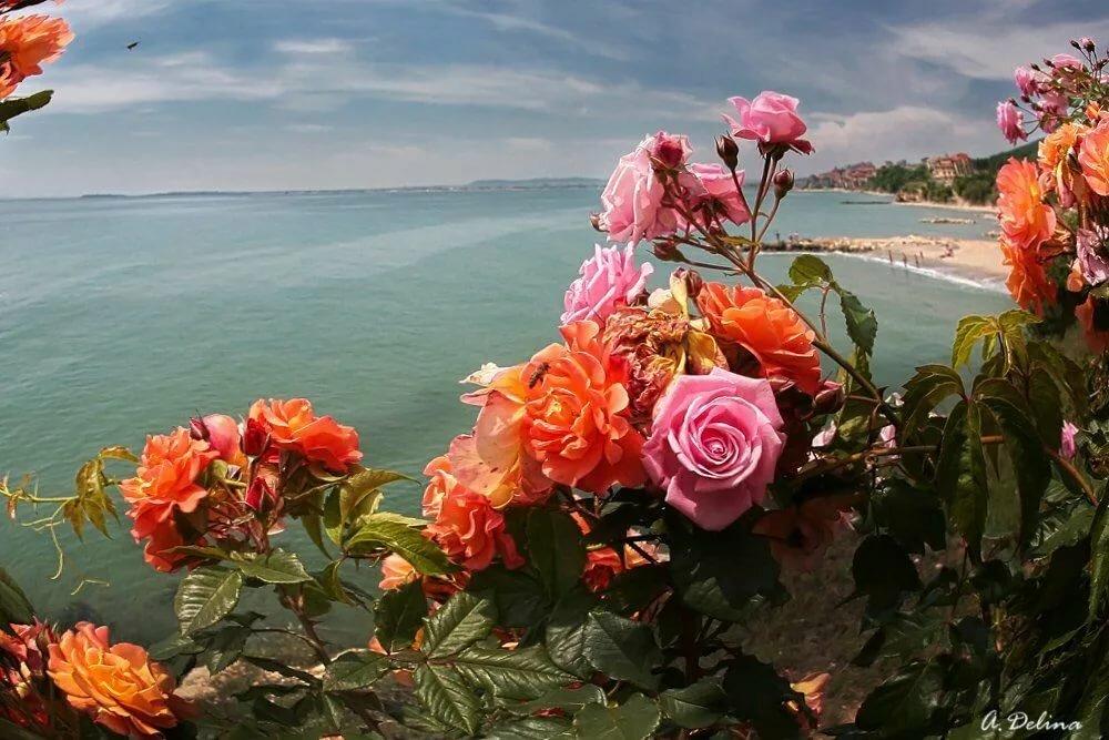 Море роз картинки фото