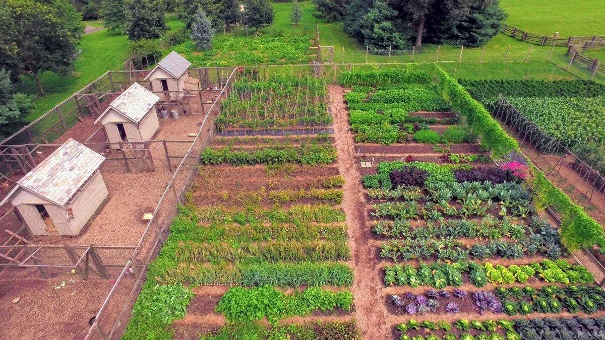 Картинка огород и домами