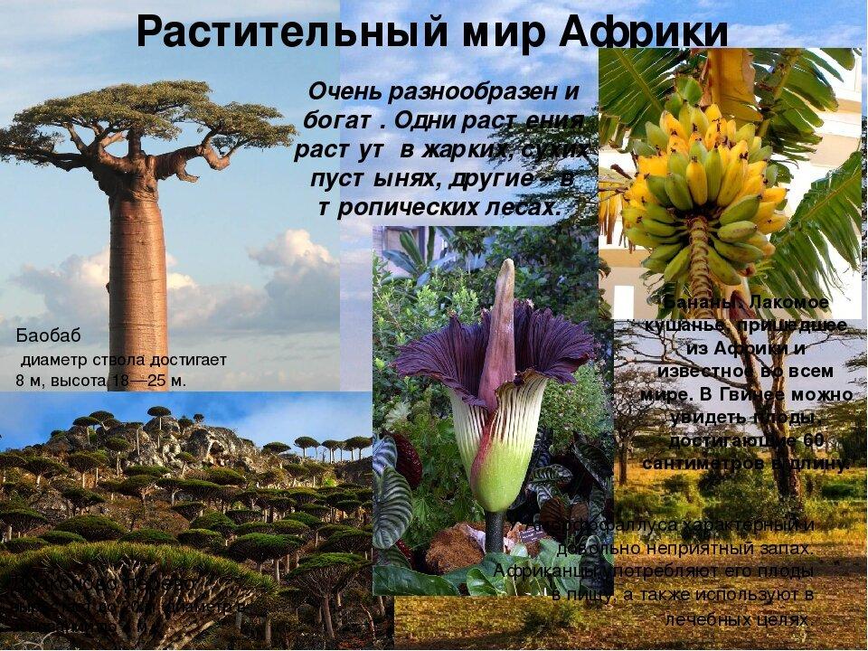 Картинки растений африки для детей