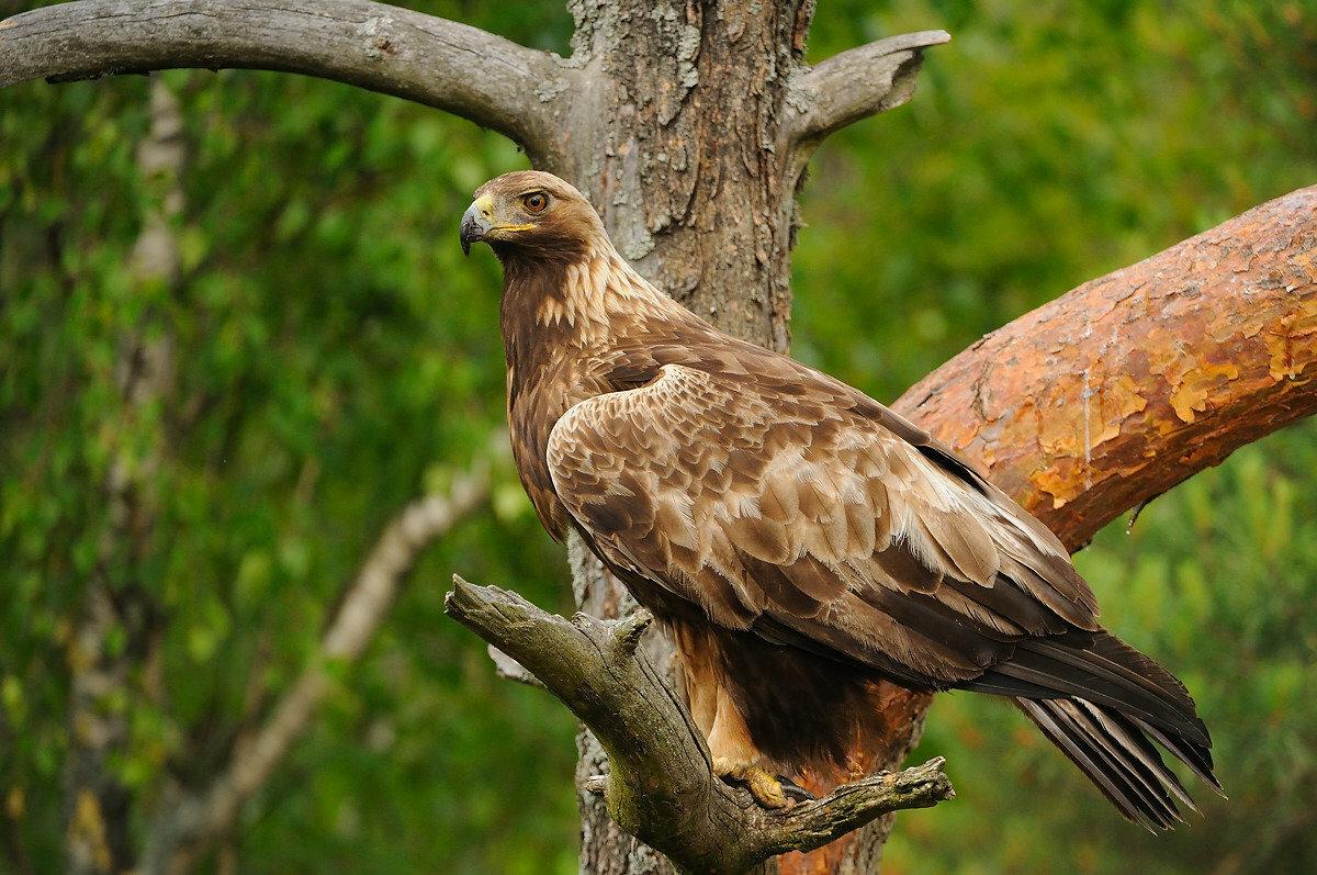 воспевание женской редкие животные краснодарского края фото копится нем протяжении