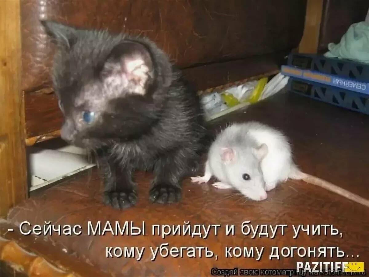 Поздравительных открыток, прикольные картинки с надписями кот и мыши