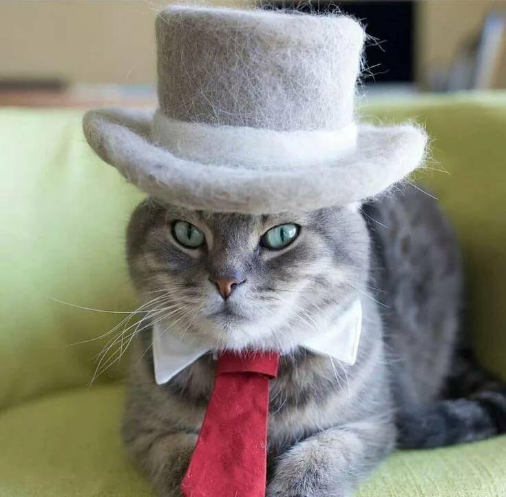 каждым картинки элегантный кот соорудили еще, когда