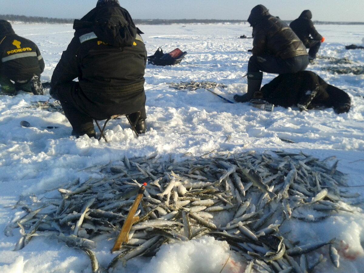 Ловля корюшки зимой на сахалине