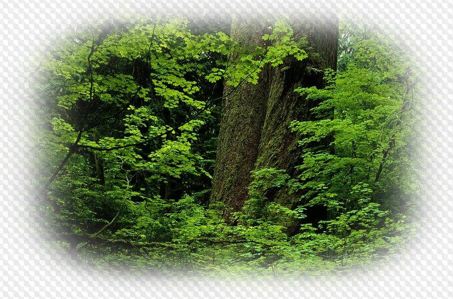 Картинки пнг природы