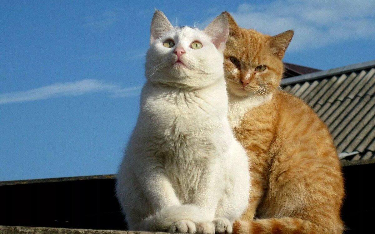 картинки кошек парами подробный фото обзор