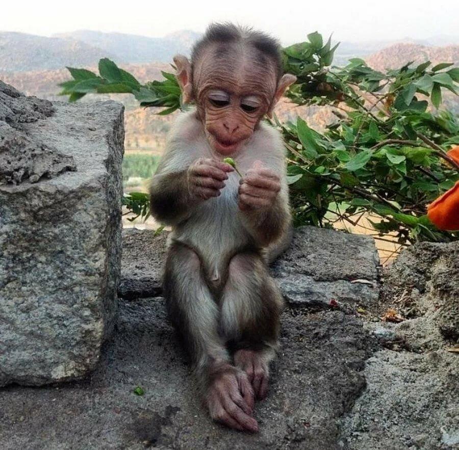 Фото приколы с обезьянами и надписями