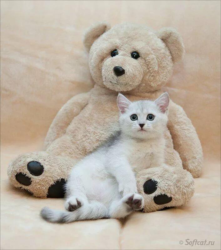 современной картинки котиков и мишек всем фотографией