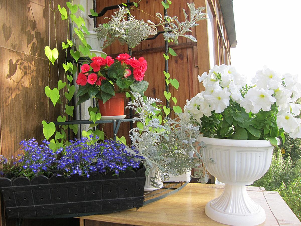 Красиво на балконе разместить цветы фото снимки