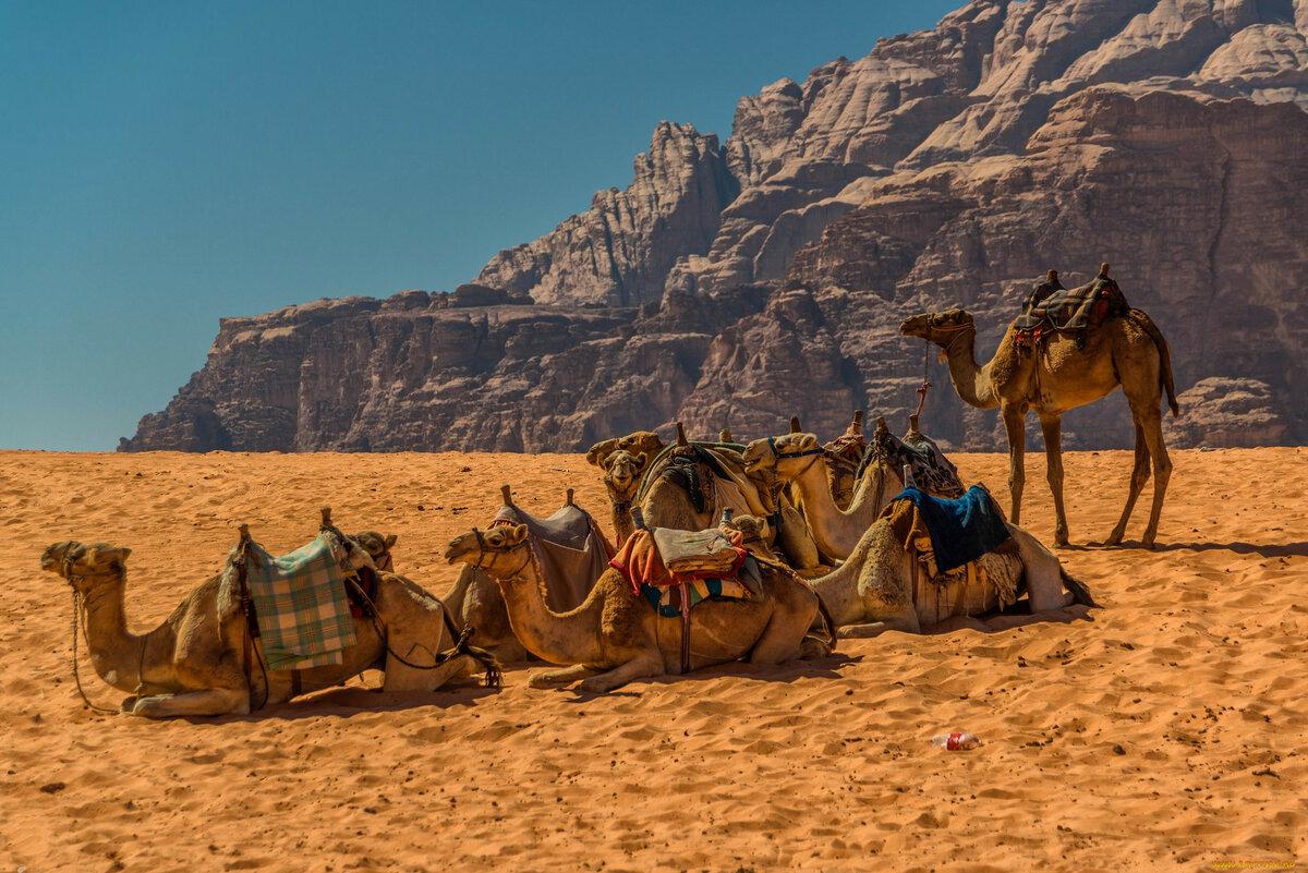 экспертиза картина пустыня с верблюдом человека