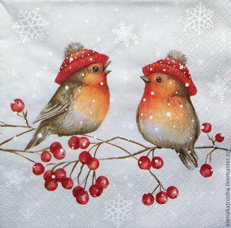 Красивые, новогодние картинки птички
