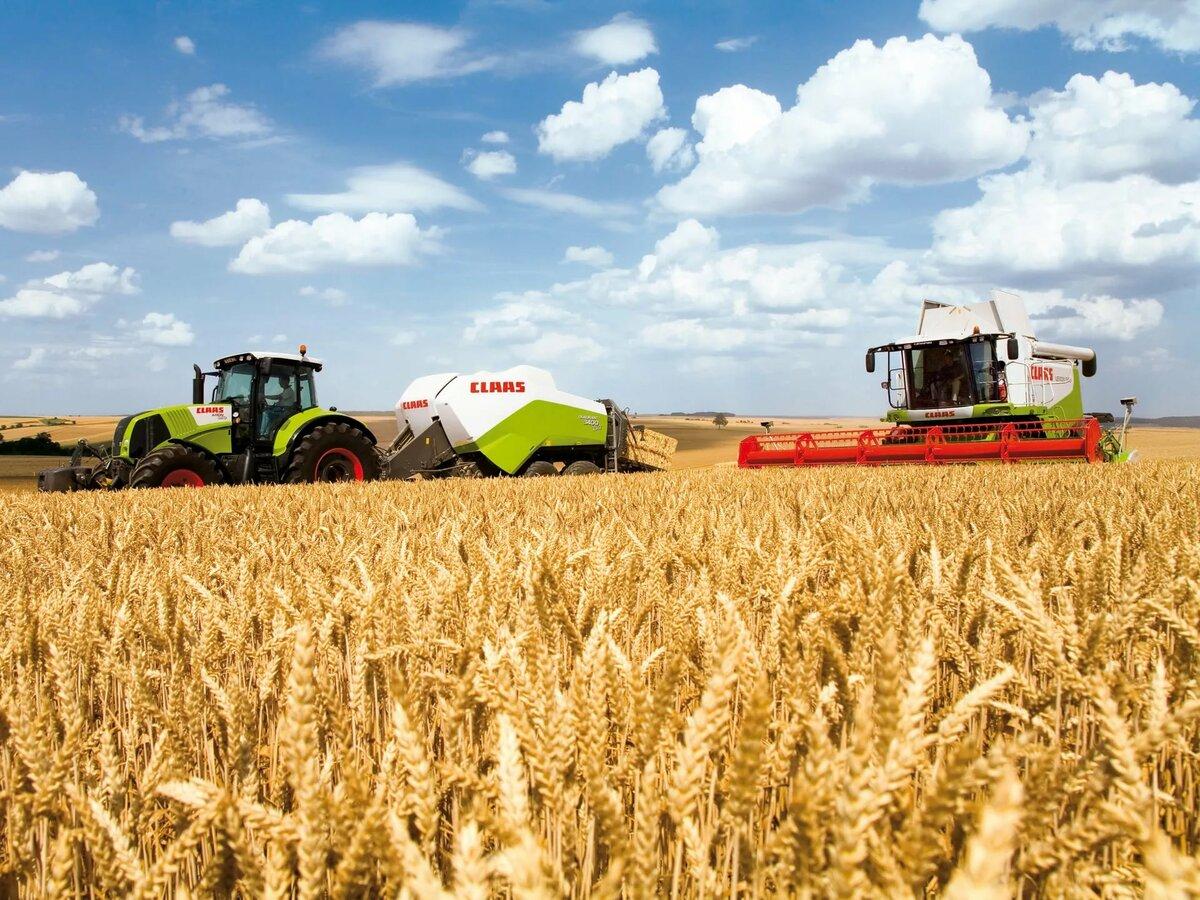Бизнес-план по выращиванию пшеницы и сои с зернохранилищем (