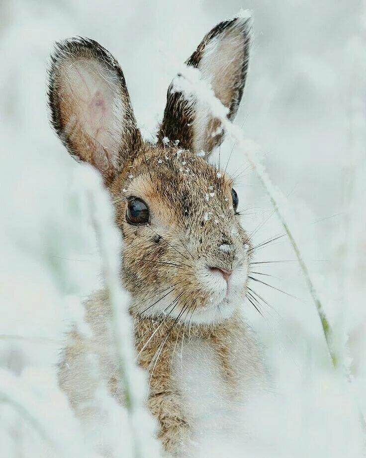 красивые картинки заяц на снегу когда