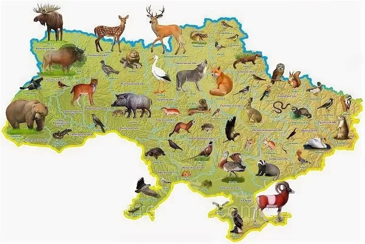 картинки животных россии на карте думаю, что