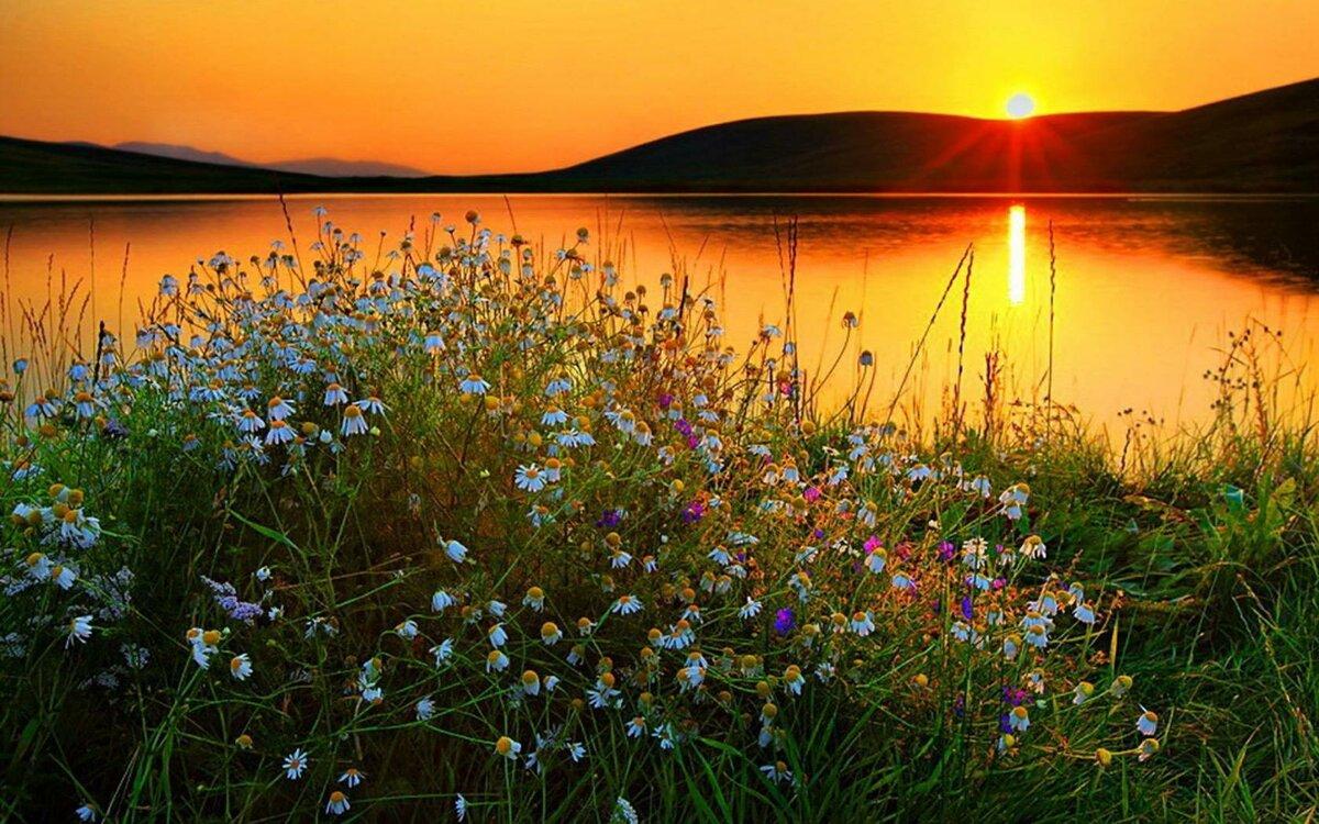 картинки с добрым вечером с видом на солнечное поле ромашек эти сроки завершится