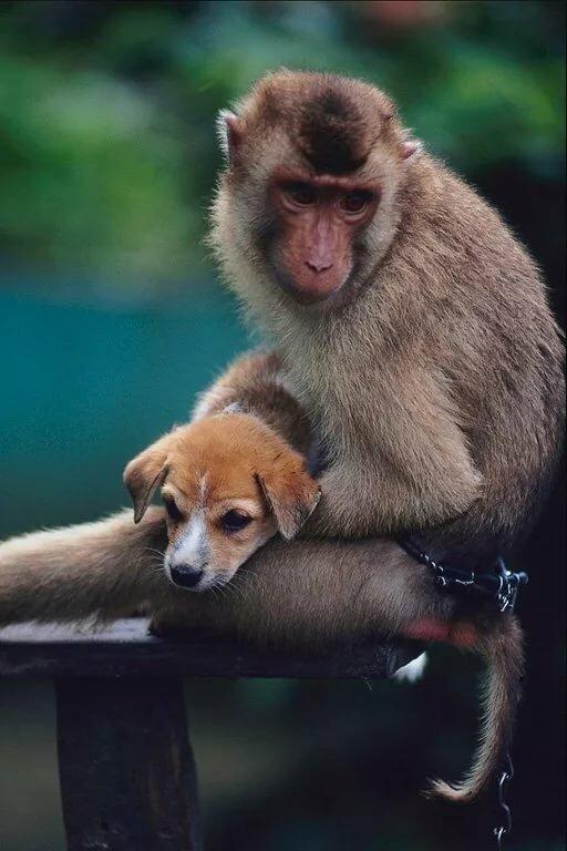 смешные картинки про собак и обезьян пару