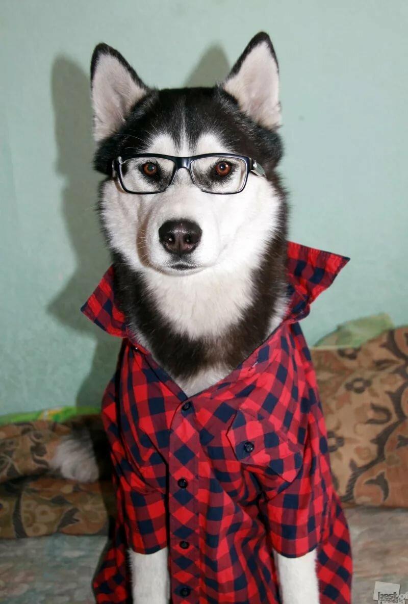 интересные фото крутых собак хаски певицы славы опубликовала