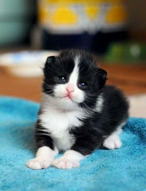 черно белый котенок фото лента лучшие обои