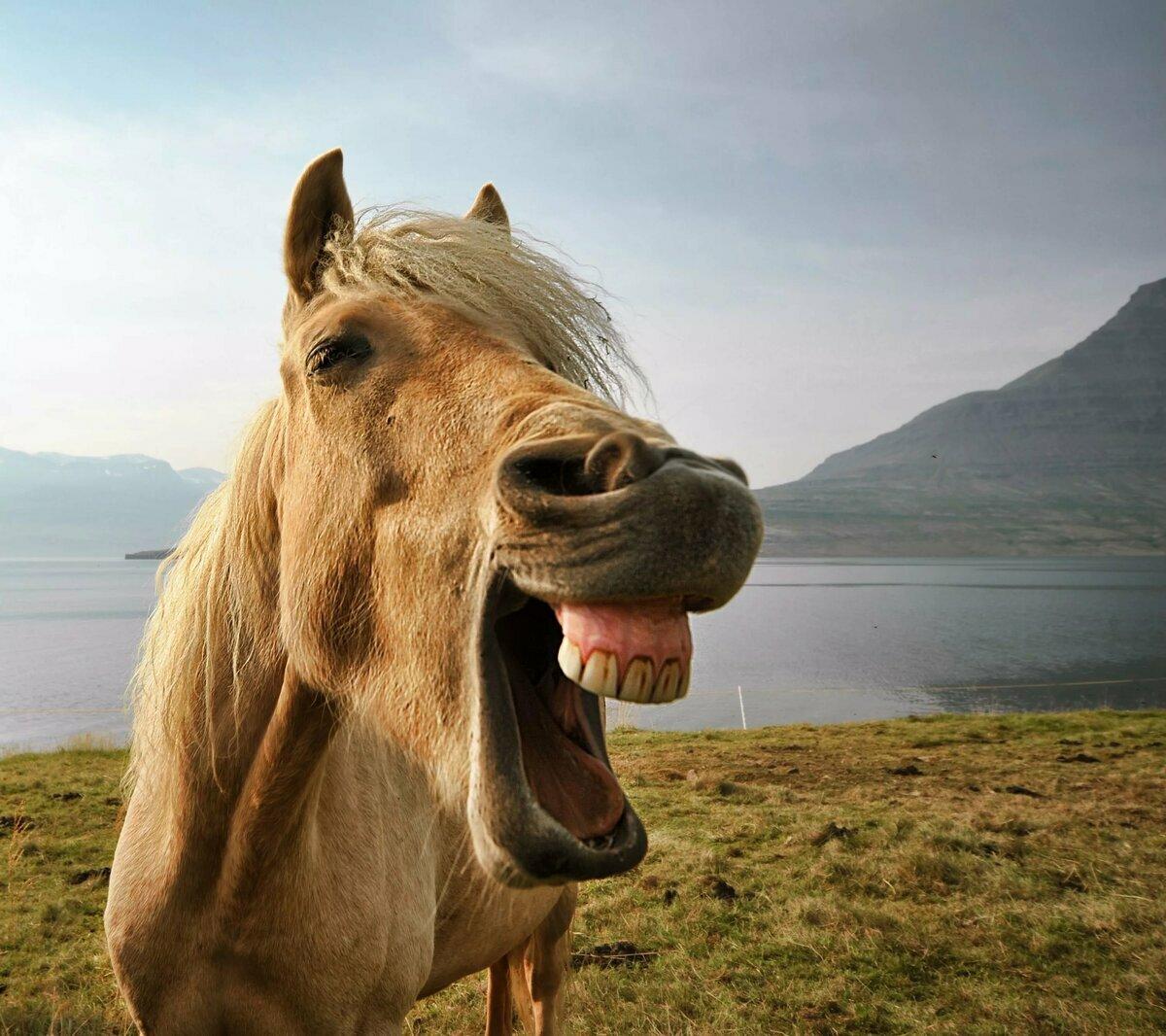 ржущие лошади картинки изображением животных используются