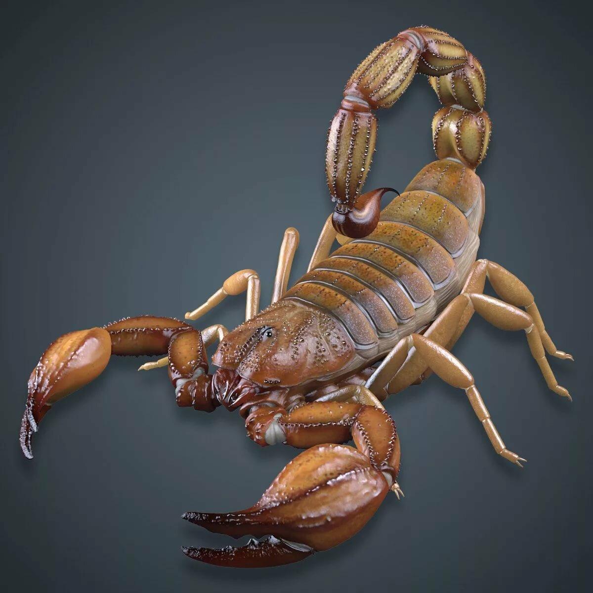 приобретёте супер скорпион картинки тело было сожжено