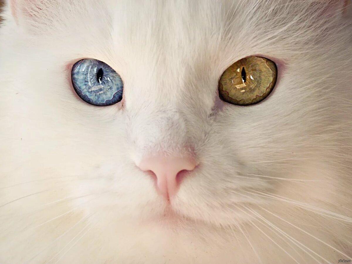 Красивые картинки кошек с глазами