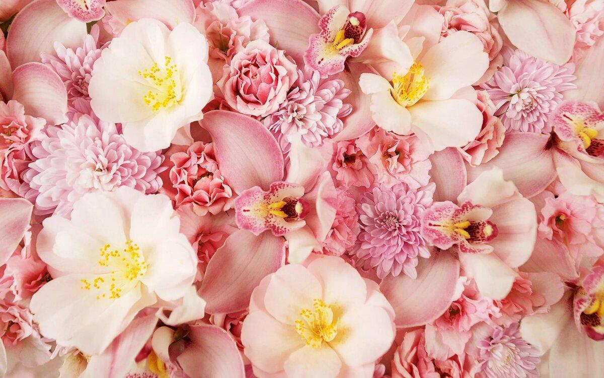 Картинки с красивыми цветами, картинки смешные