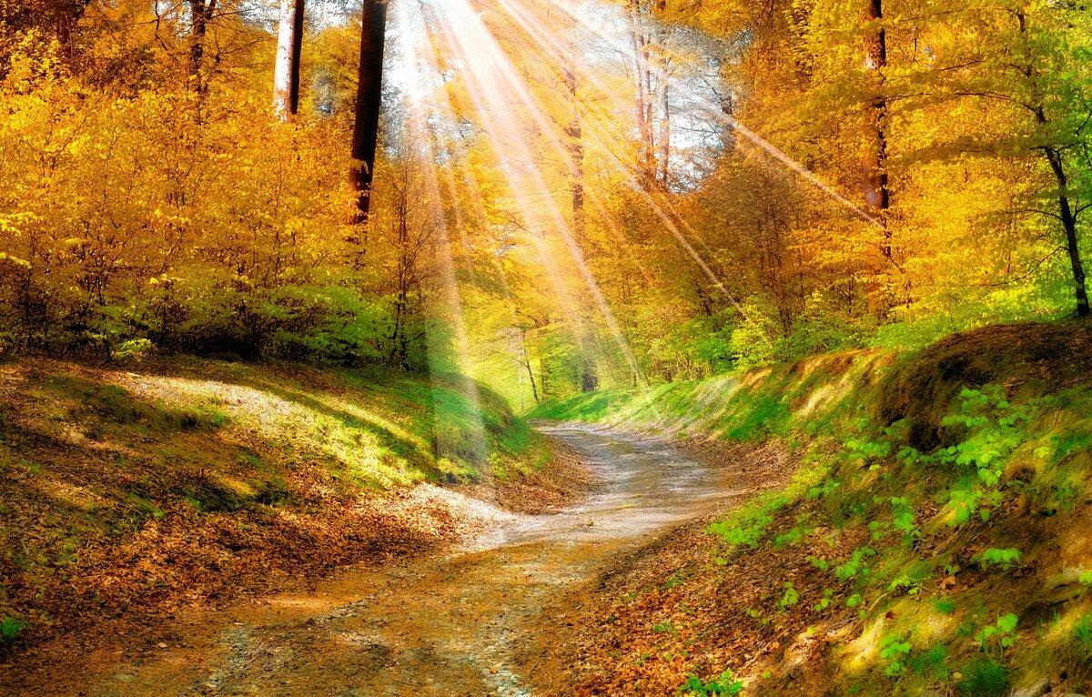 Картинки золото осени