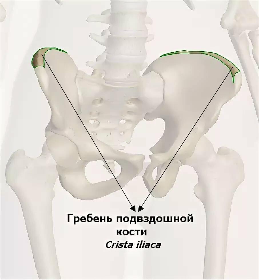 Картинки подвздошная кость