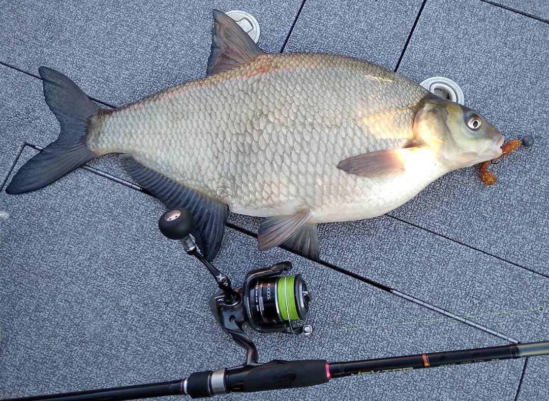 Отчеты о рыбалке с оки