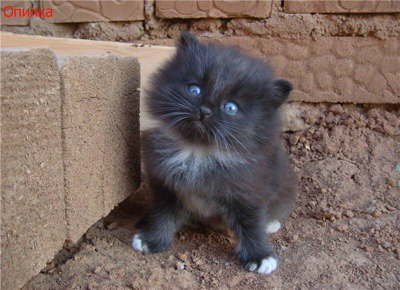 Поздравлением новым, картинки грустные котята с надписями