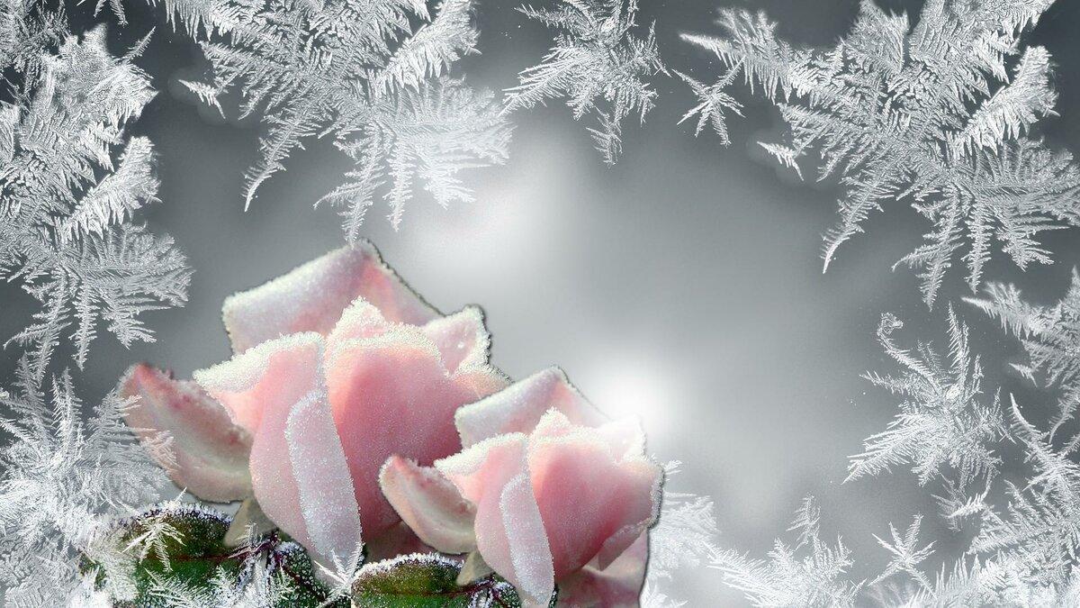 Открытки нового, зимняя открытка с цветами