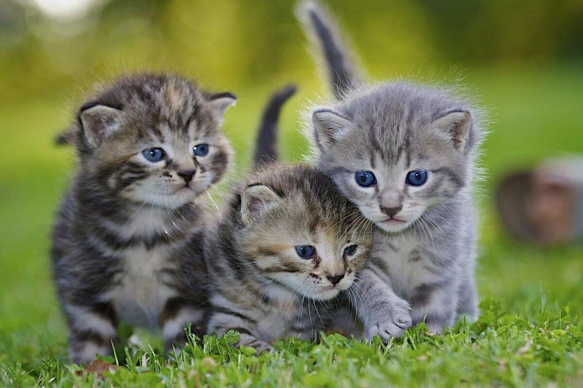 открытием новых посмотреть фотографии про котят оружие один наиболее