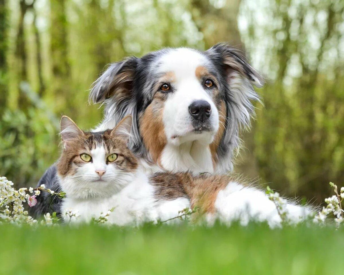 картинки с домашними животными собаками