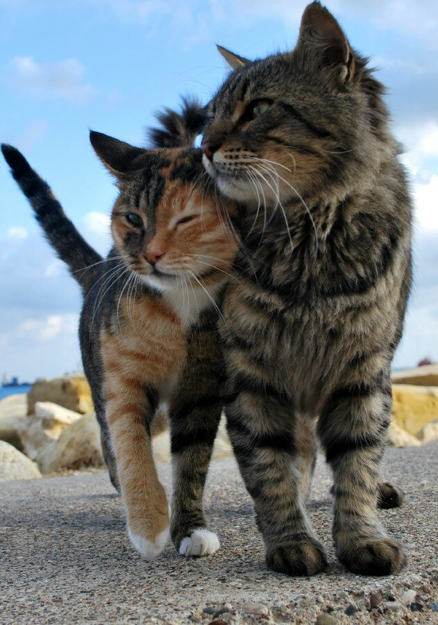 Кот и кошка картинки