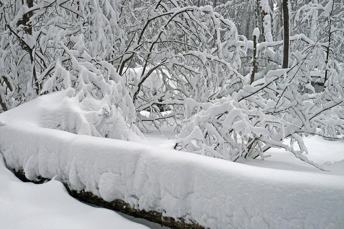 Картинки заметенная снегом