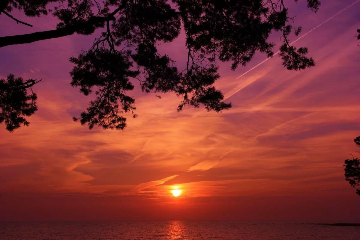 чайки картинки красивый рассвет или закат проведите