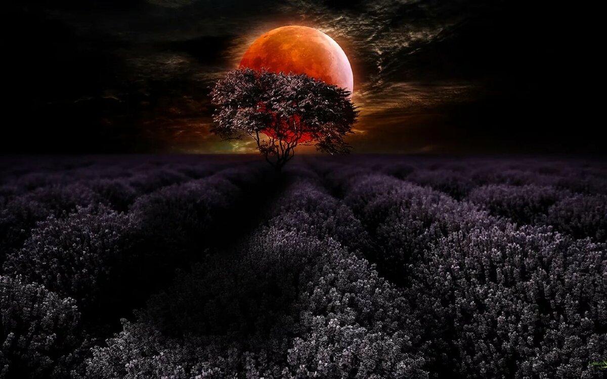 Картинки ночь луна поле
