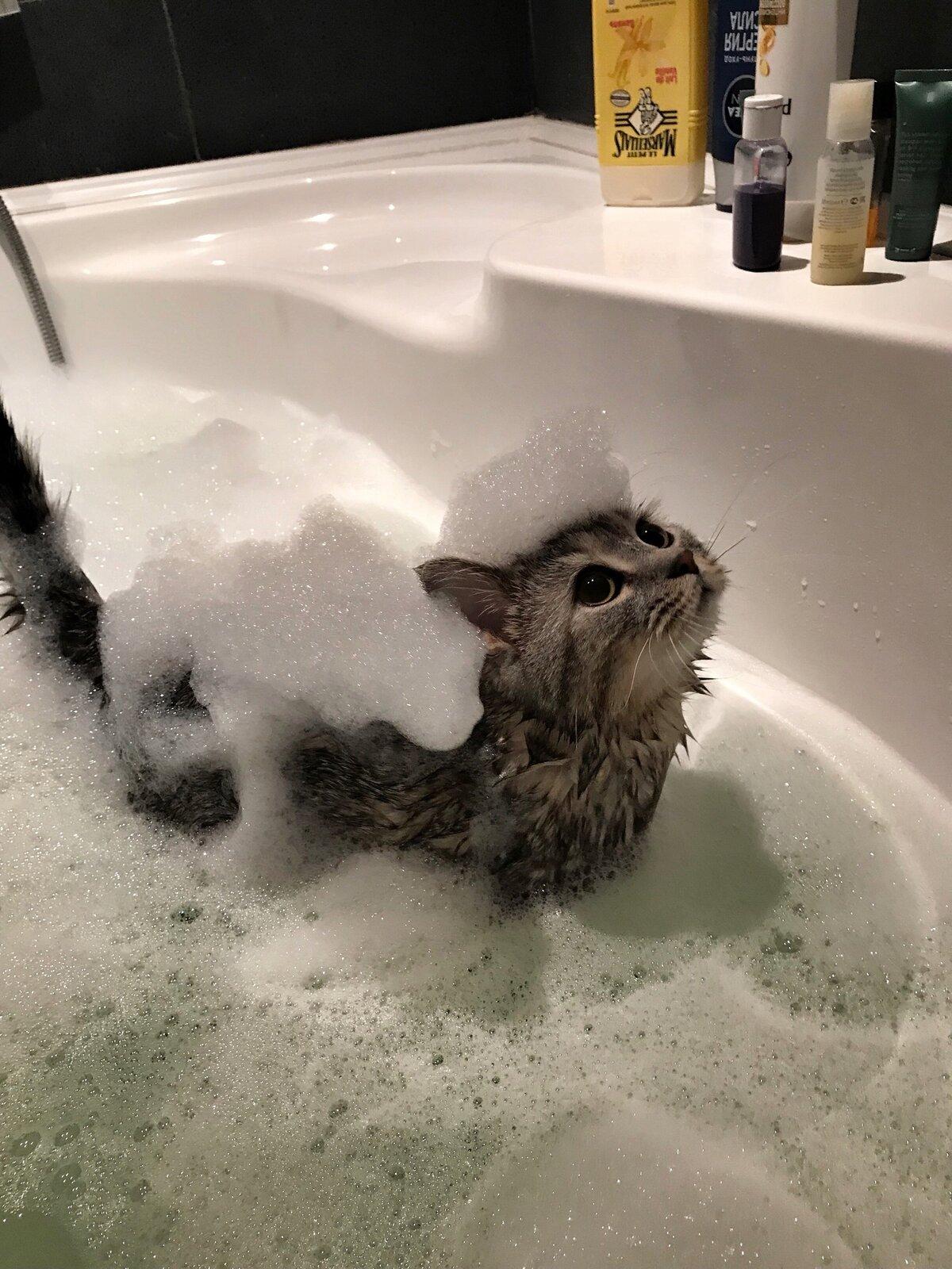 Смешная картинка в ванной, открытки