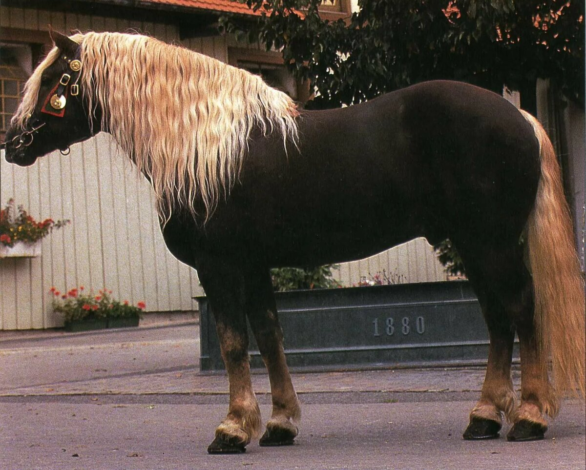 типы лошадей картинки расположена там