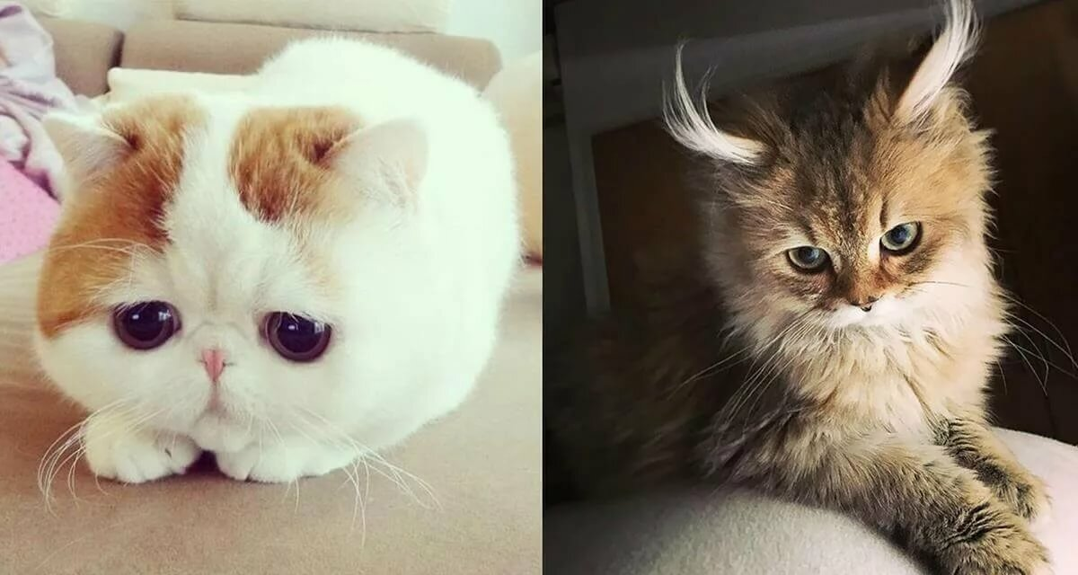 Самый милый кот в мире картинка