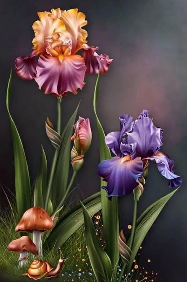 Открытка с цветами ирис, прикольные животные мира