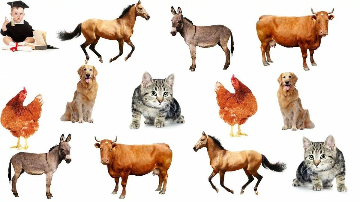 Картинка домашние животные и дикие