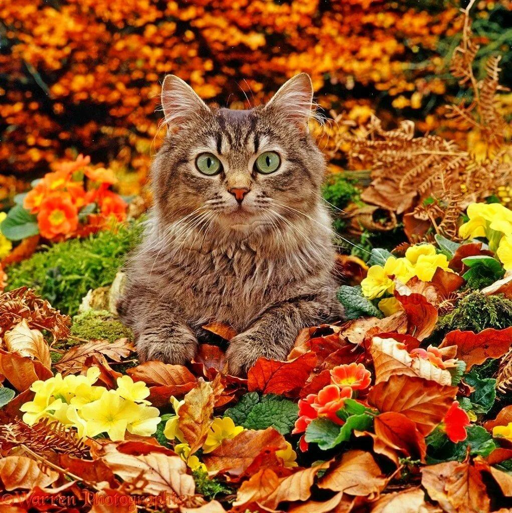 Открытки кота с осени, картинки приколами поздравления